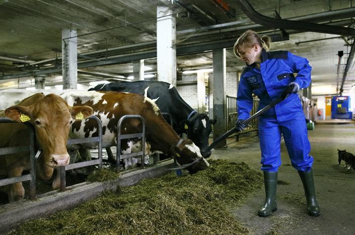 Keski-Suomen lomituspalveluhankkeessa valmistaudutaan maakuntamalliin