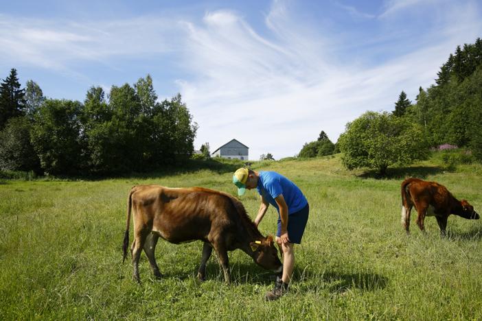 Nuoret maatilan kesätöissä